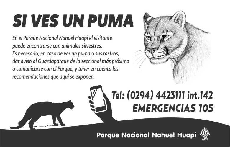 puma frente-2018 (2)