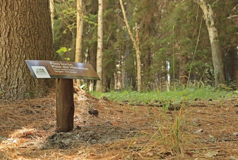 Reconocimiento_Arboretum Isla Victoria_09