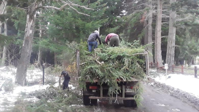 Recolección de residuos forestales